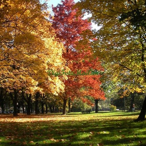 Čarování s podzimními barvami I