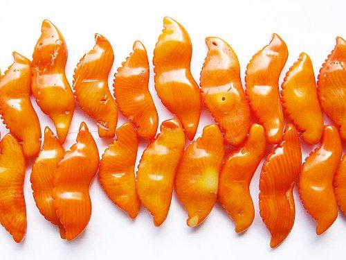 Korál - lusk žlutý ((PM3))