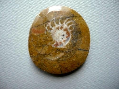 Amonit v matečné hornině 34 mm, č.12