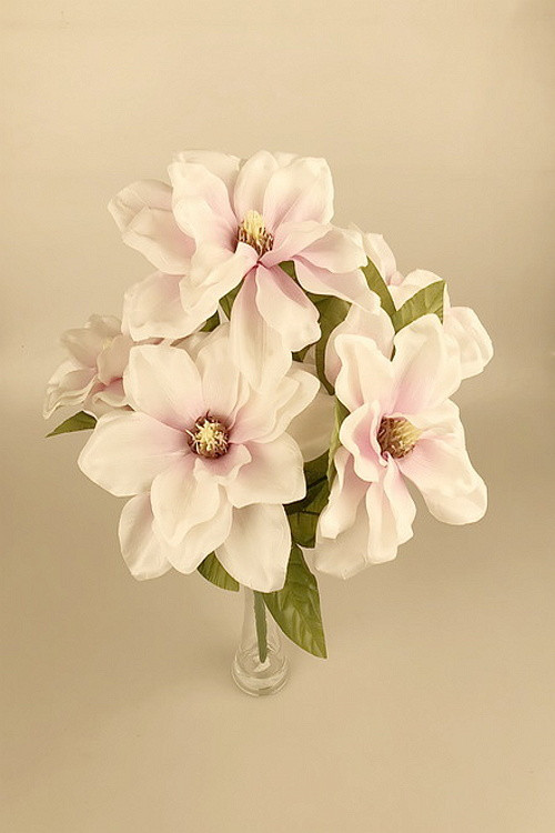 Magnolie bílorůžová