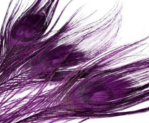 Tm.fialové paví peří 1ks