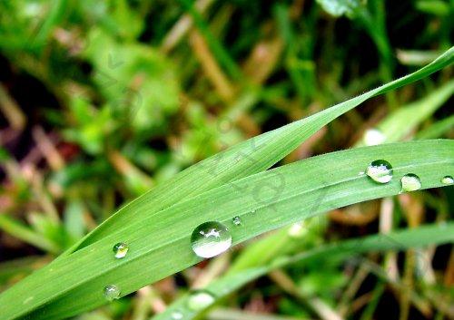 co se děje v trávě