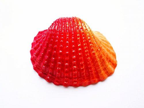 Červenooranžová duhová mušle ((OST100))