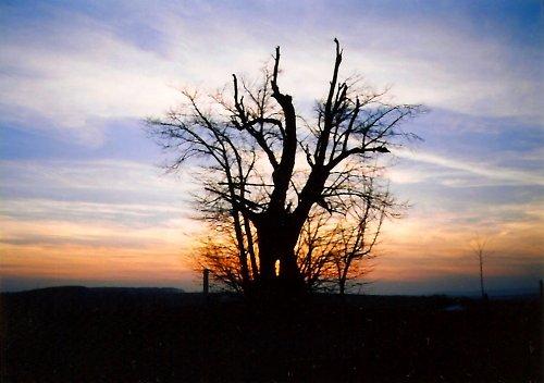 Západ slunce za zraněným stromem