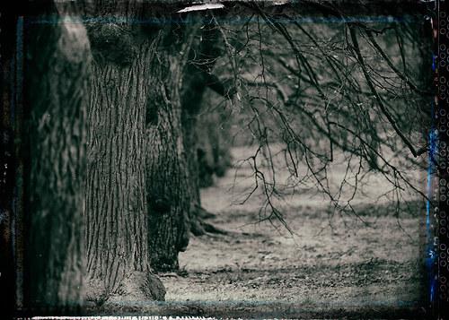 Krajina se starými stromy 2 - fotografie 40x30 cm