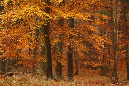 V tajemném lese II.