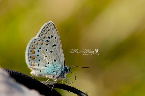 Chci mít křídla motýlí