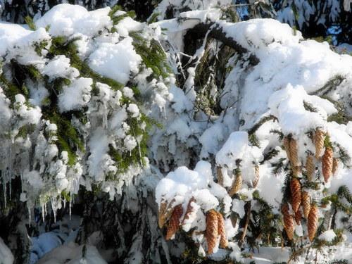 Na větvi ... vánoční přání, pf ...
