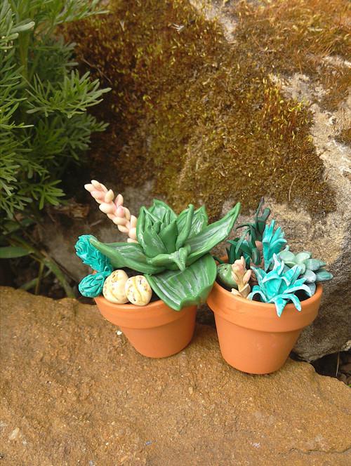 Rostlinky pro ty kterým chcipne i kaktus ☻☺