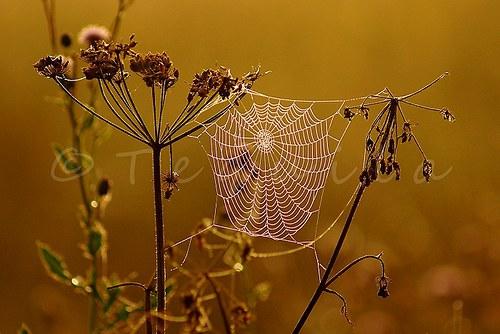 Pavoučí ráno