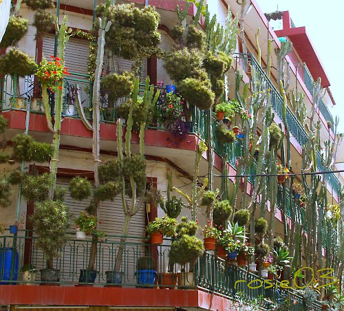 Kaktusový dům