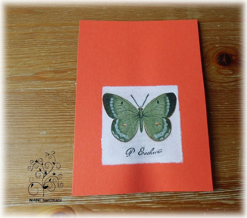Pohlednice - motýl