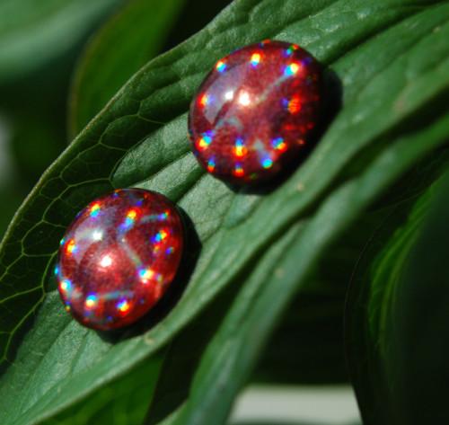 Puzetky - svítivky červenostříbrné