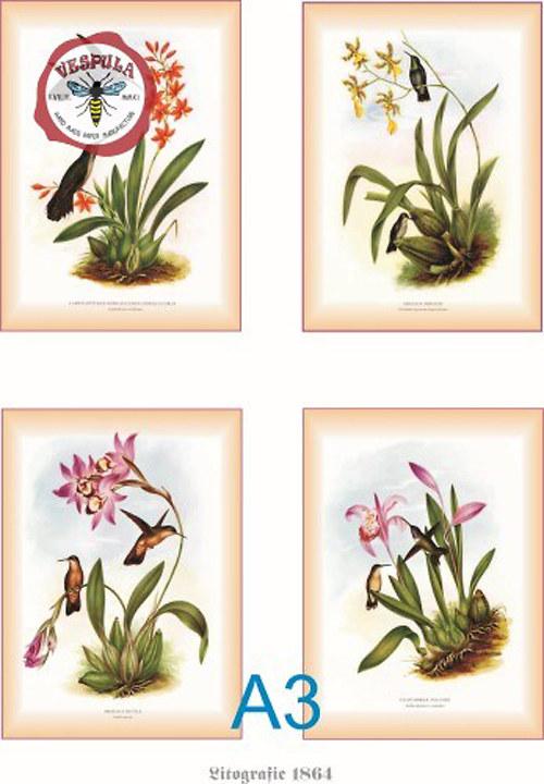 Květiny, botanika