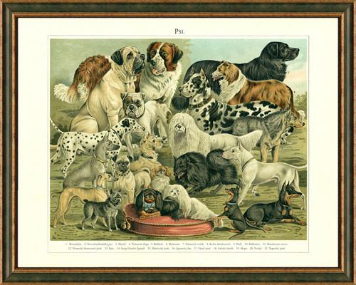 Obraz: 21 plemen psů