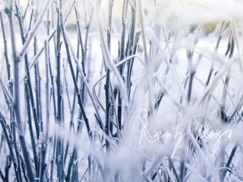 Winter.. V.