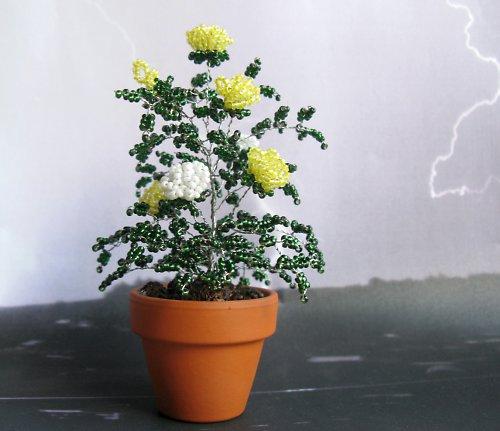 Žluté a bílé korálkové růže