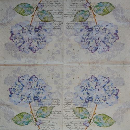 Hortenzie a dopis 872