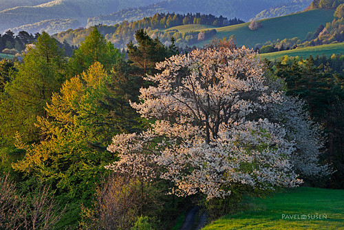 Těším se na jaro