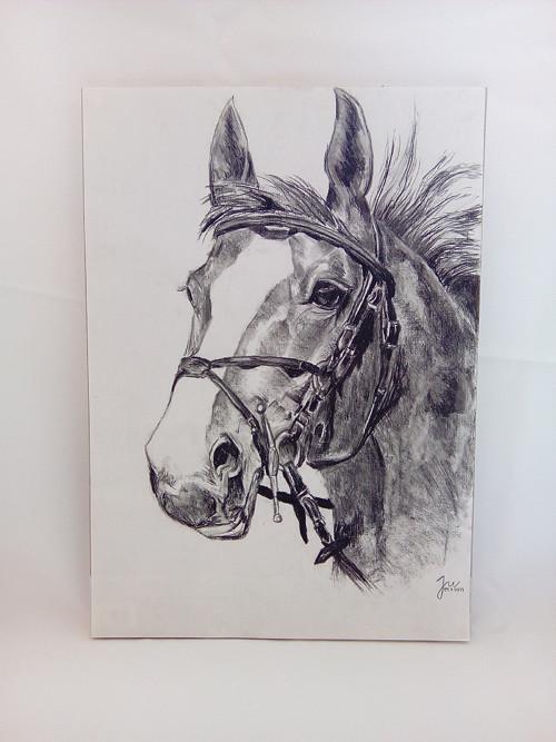 Jezdecký kůň
