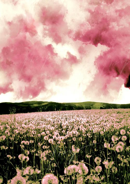 Jaro se vyspalo do růžova..