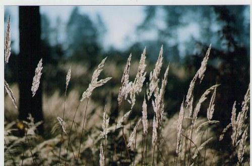 Travina v lese