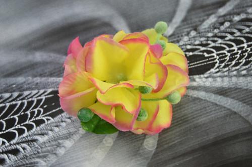 Žlutá hortenzie  - pineta