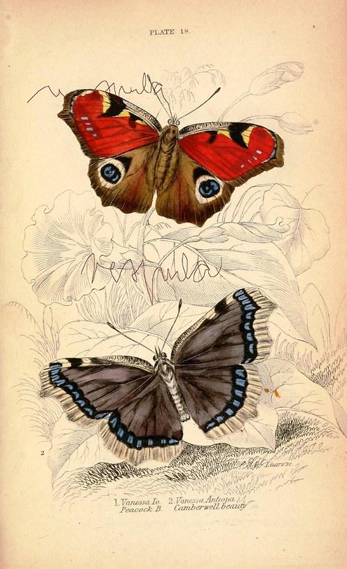 Motýli III