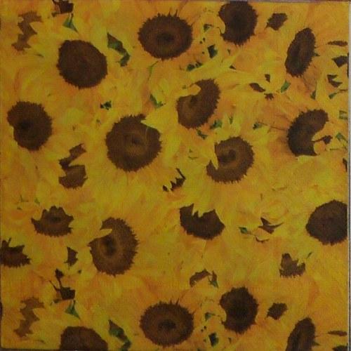 Slunečnice - celoplošné