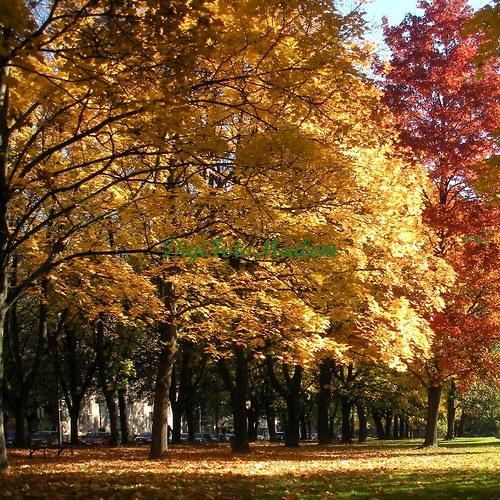 Čarování s podzimními barvami II