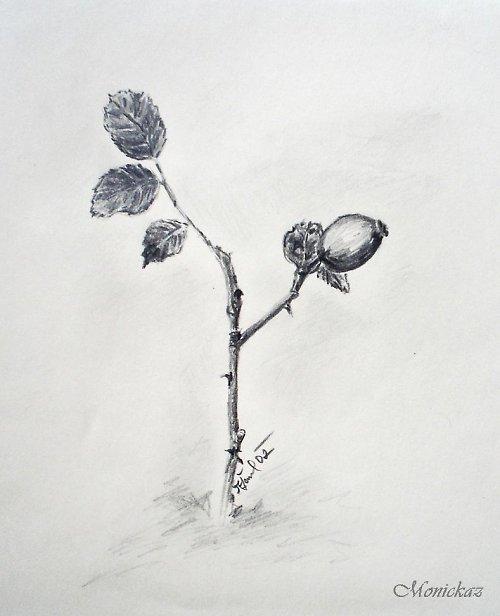 Šípková růženka...
