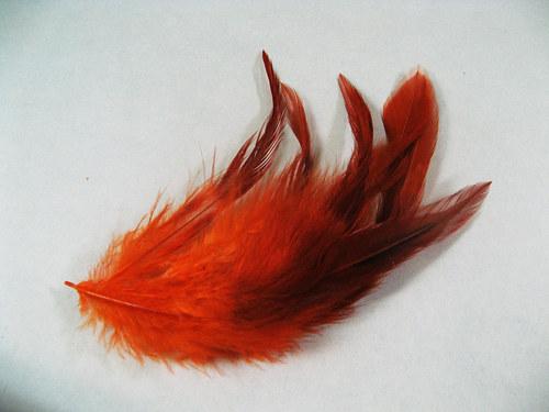 Oranžovočerné peří