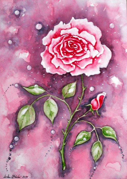 Růžička v lila