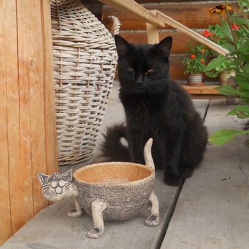 Miska pro kočku