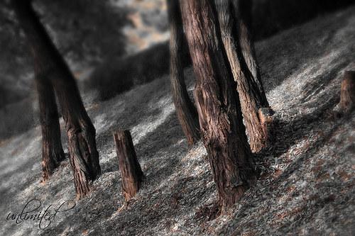 """Fotografie \""""Místečko lesních skřítků\"""""""