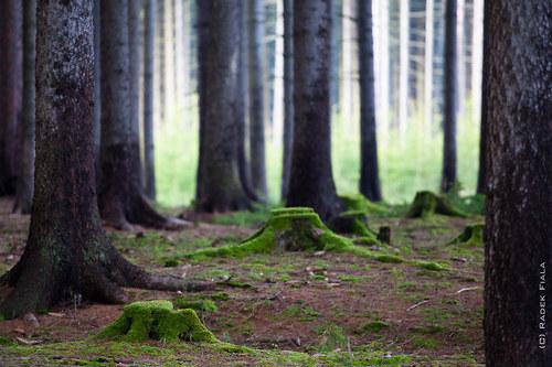 Nejasná představa o lese 5