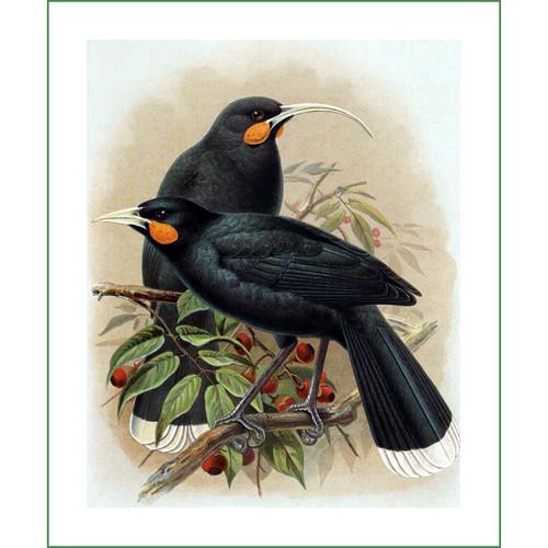 ptáci (30) - J.G.Keulemans  (látkový panel)