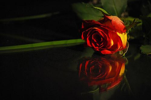 Pohled Růže
