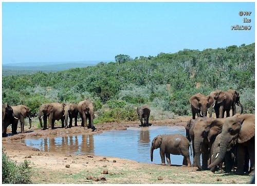 15. Sloni u jezera - autorská fotografie