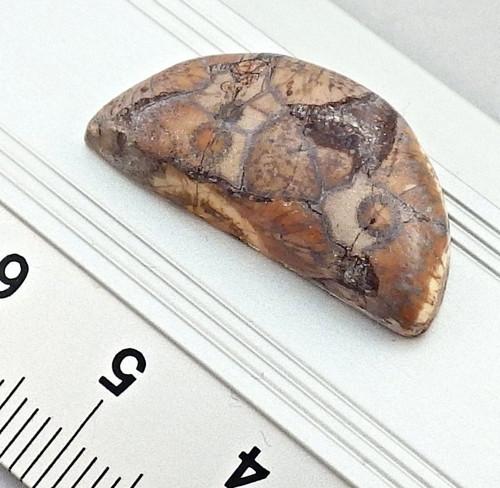 Přírodní fosilní jaspis - kabošon půlměsíc