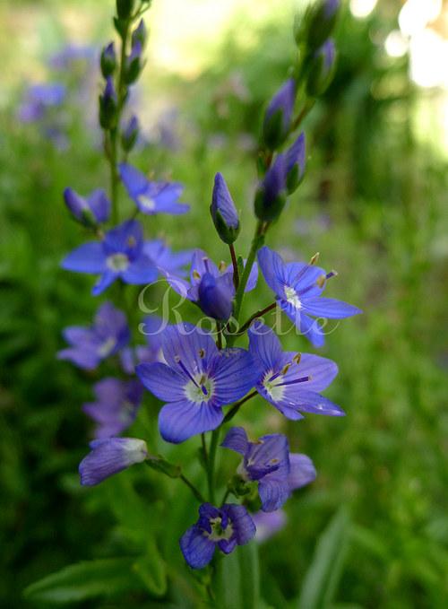 Dark blue... - autorská fotografie