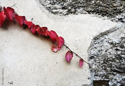 Na zdi IV
