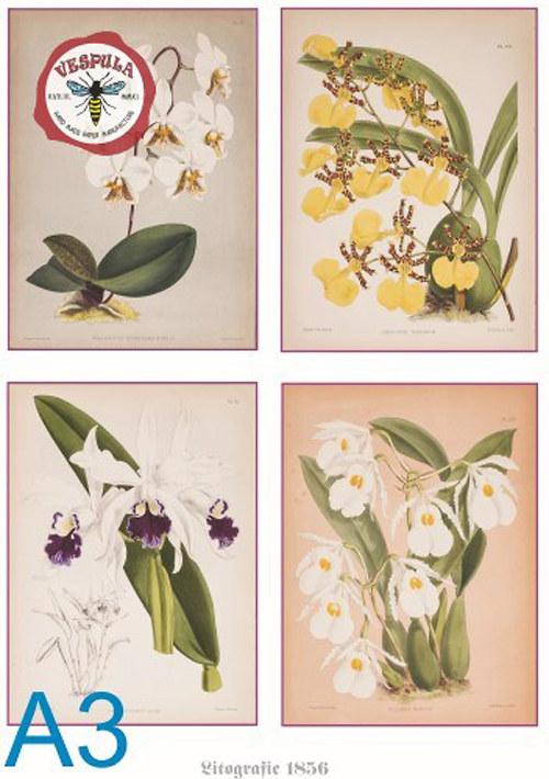 Květiny - orchideje