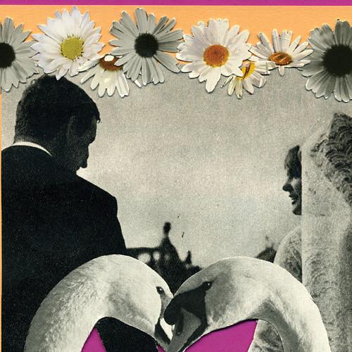 autorská koláž/ Labutí svatební