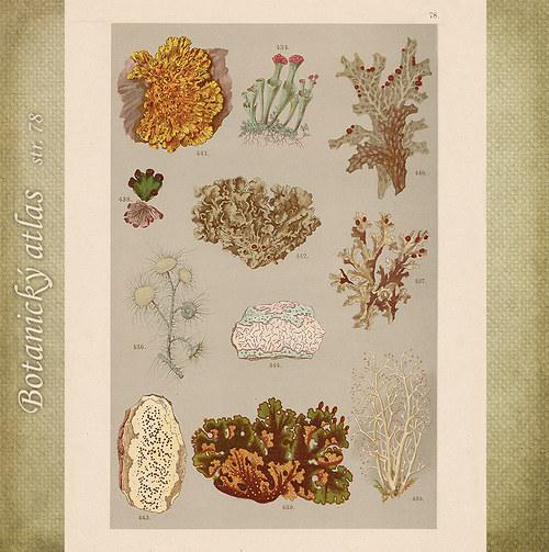 Rostliny - tab. 78 (r. 1898)