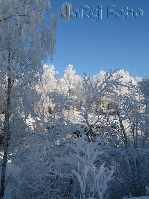 Zmrzlé stromy