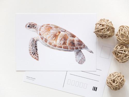 Podmořská pohlednice kareta obrovská