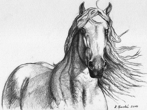Objednávky kreseb a maleb koní/a jiné.../