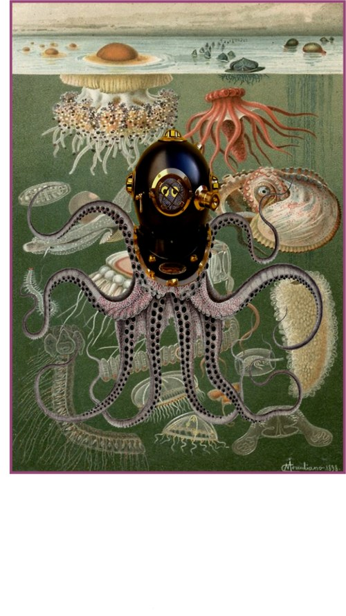 Divná chobotnice