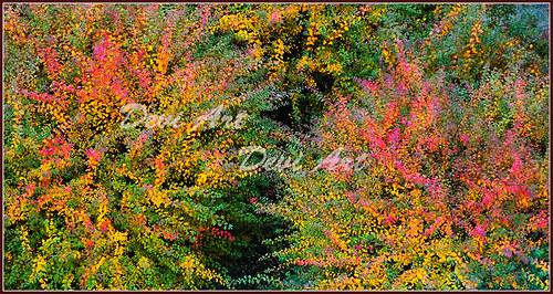 Podzimní ohňostroj - 40x21